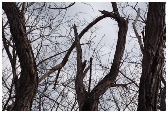 woodpecker 2